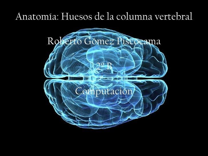 Anatomía: Huesos de la columna vertebral       Roberto Gómez Piscocama                  2º B             Computación