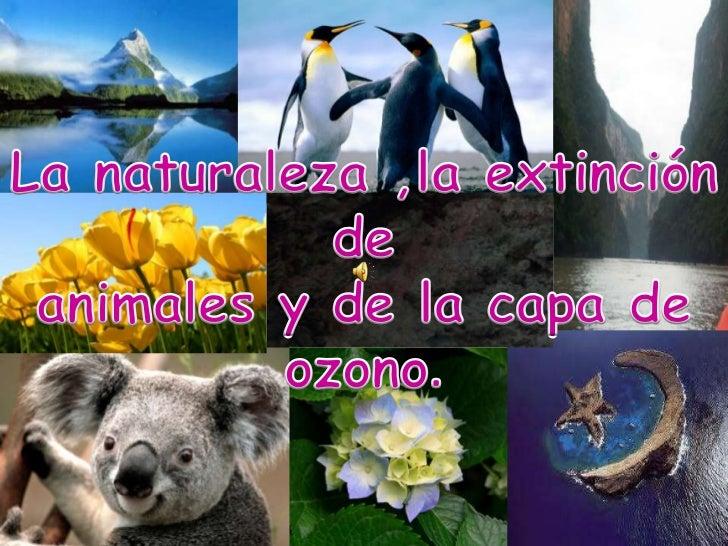 La naturaleza ,la extinción de <br />animales y de la capa de ozono.<br />