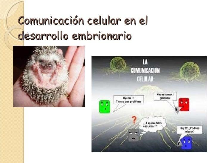 Comunicación celular en el desarrollo embrionario