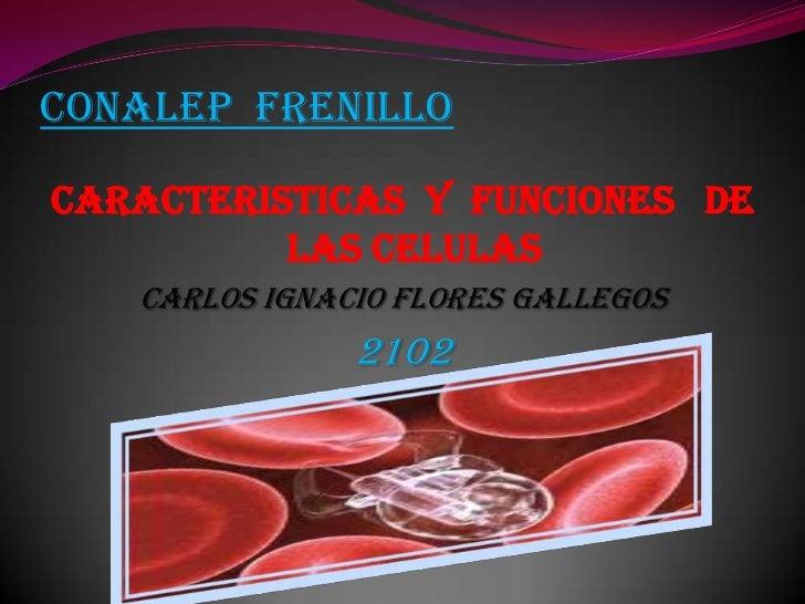 CONALEP  FRENILLO<br />CARACTERISTICAS  Y  FUNCIONES   DE  LAS CELULAS<br />CARLOS IGNACIO FLORES GALLEGOS<br />2102<br />