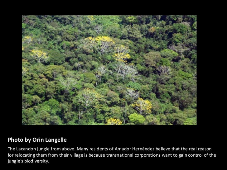 Lacandon Jungle Climate />the Lacandon Jungle From