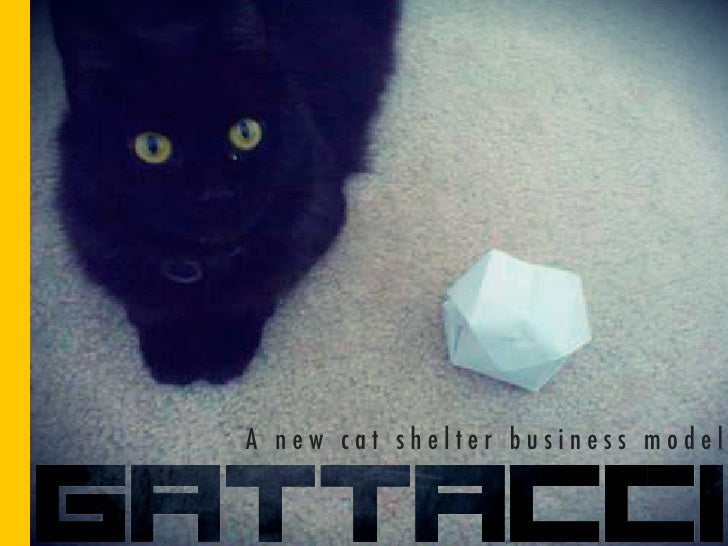 A new cat shelter business model