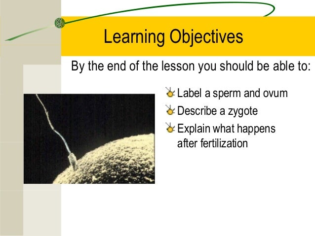 Learning ObjectivesBy the end of the lesson you should be able to:Label a sperm and ovumDescribe a zygoteExplain what happ...