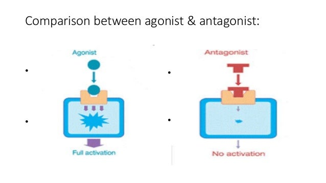 mechanism of non steroid hormone action animation