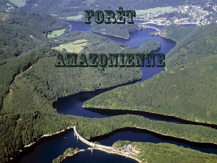 Forêt amazonienne<br />
