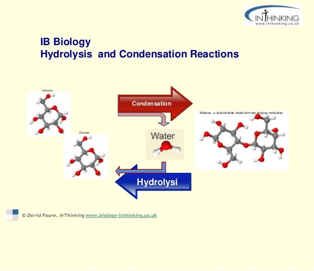 IB Biology Hydrolysis and Condensation Reactions Hydrolysi s Condensation Glucose Maltose - a disaccharide made from two g...