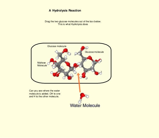 Condensation Water Molecules Water Molecule is Added