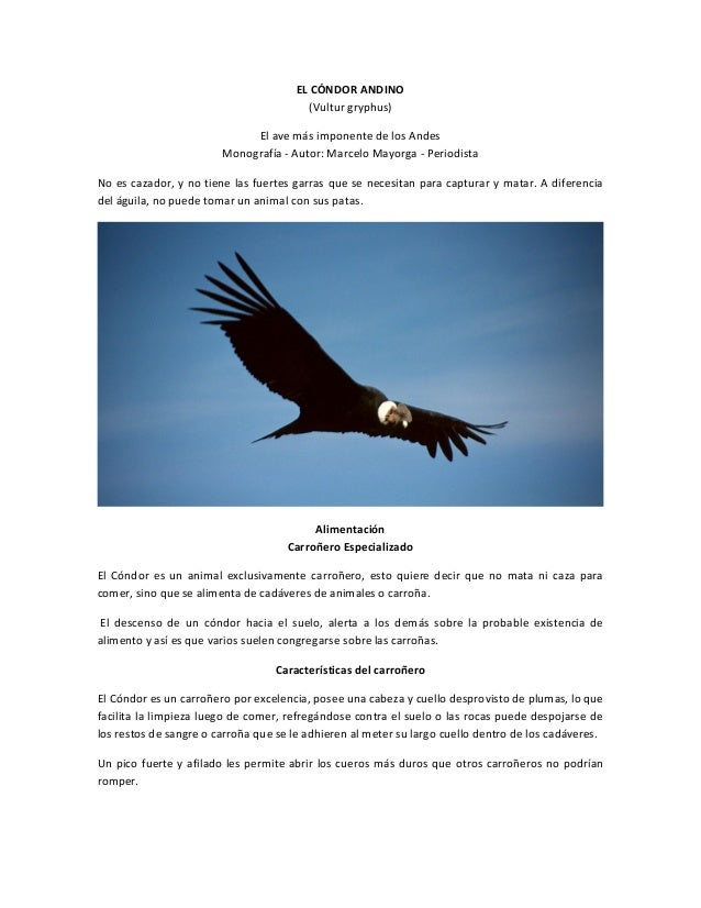 EL CÓNDOR ANDINO (Vultur gryphus) El ave más imponente de los Andes Monografía - Autor: Marcelo Mayorga - Periodista No es...