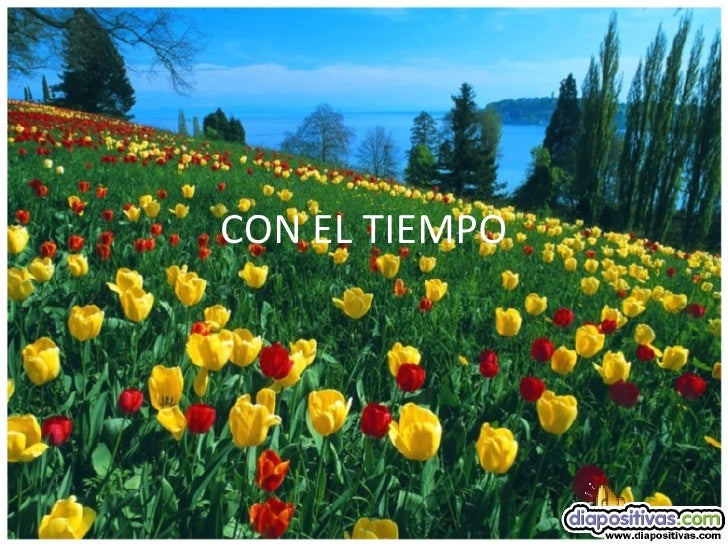 Beautiful flower scenery hot girls wallpaper for El tiempo les borges blanques