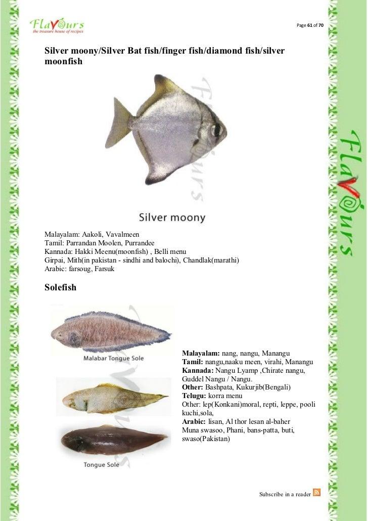 Names of fish