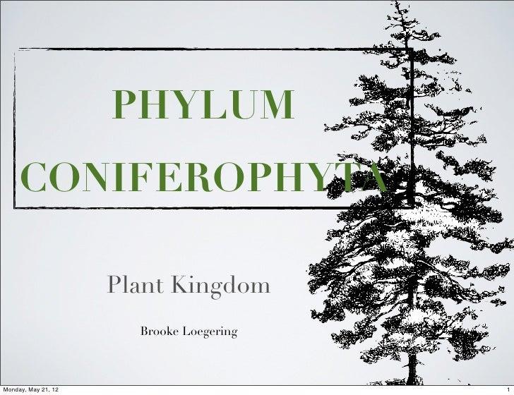 PHYLUM     CONIFEROPHYTA                     Plant Kingdom                       Brooke LoegeringMonday, May 21, 12       ...