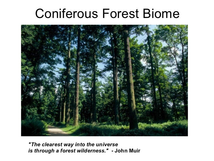 """Coniferous Forest Biome """"The clearest way into the universe is through a forest wilderness.""""  - John Muir"""