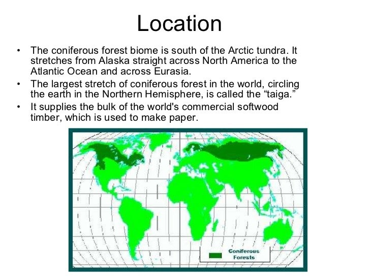 interesting facts about coniferous forest biomes 1the coniferous forest is probably the world's largest land biome 2the coniferous forest has 300 to 900 millimeters of rain each year 3the main source of food in the coniferous forest is the seeds produced by the conifer trees 4the larch tree.