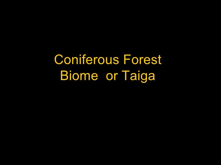 Coniferous forests biome