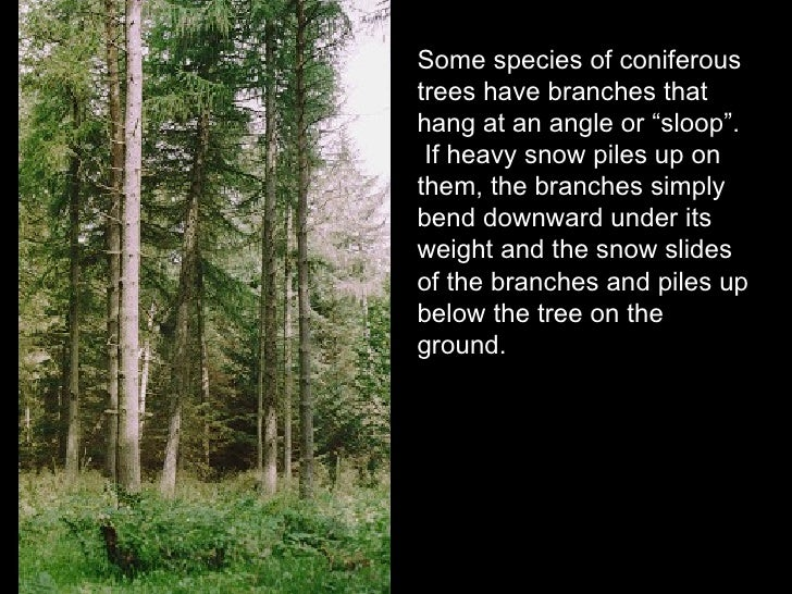 Northwestern coniferous forest animals and plants