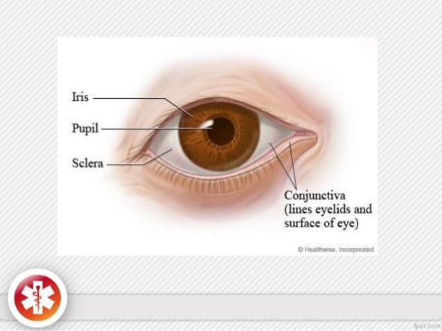Eye anatomy conjunctiva