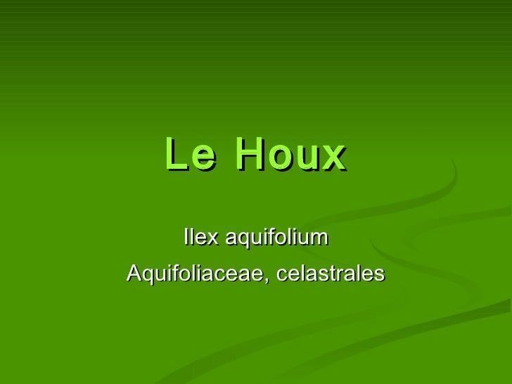 Le Houx Ilex aquifolium Aquifoliaceae, celastrales