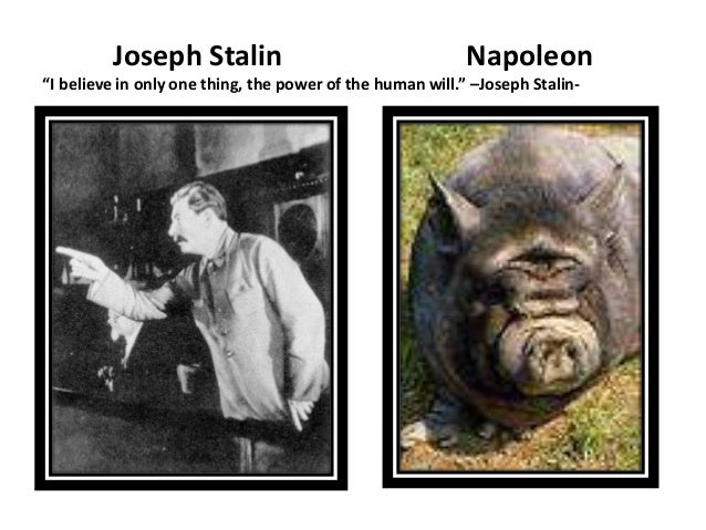 Napoleon Related Keywords & Suggestions - Joseph Stalin And Napoleon ...