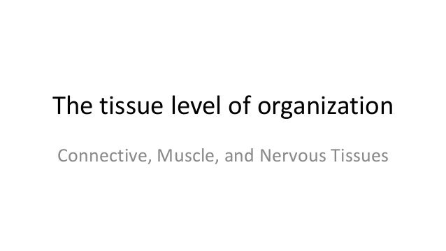 The tissue level of organization Connective, Muscle, and Nervous Tissues