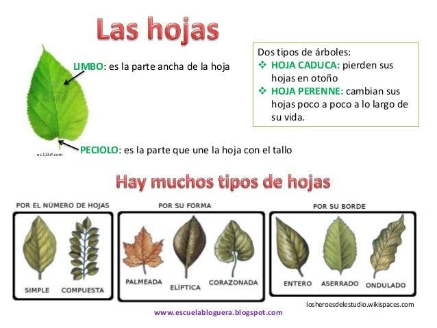 conocemos las plantas