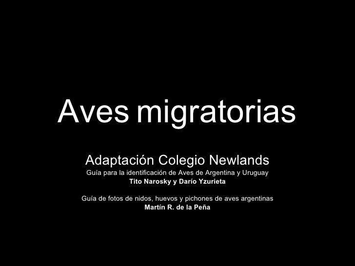 Aves   migratorias Adaptación Colegio Newlands Guía para la identificación de Aves de Argentina y Uruguay Tito Narosky y D...