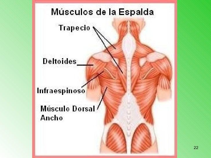 El dolor a la izquierda a nivel del ombligo da en la espalda