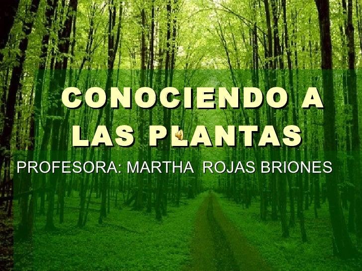 CONOCIENDO A LAS PLANTAS  PROFESORA: MARTHA  ROJAS BRIONES