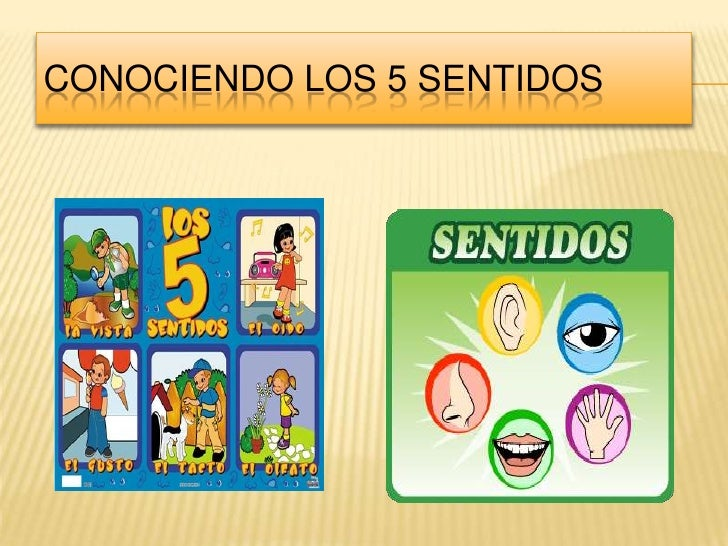 CONOCIENDO LOS 5 SENTIDOS