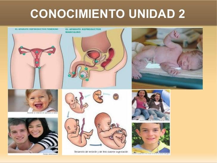 CONOCIMIENTO UNIDAD 2
