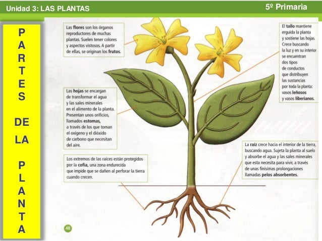 Tipos De Plantas Terrestres Related Keywords & Suggestions  Tipos De