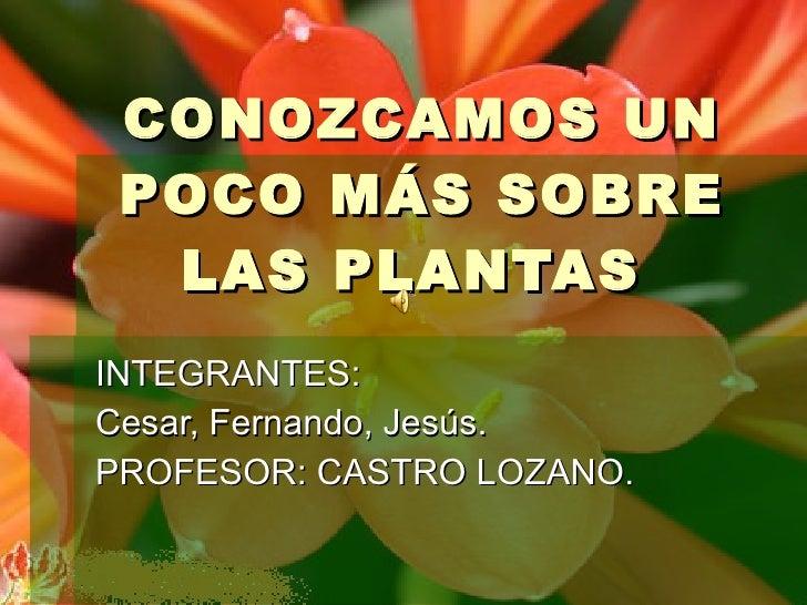 CONOZCAMOS UN POCO MÁS SOBRE LAS PLANTAS  INTEGRANTES: Cesar, Fernando, Jesús. PROFESOR: CASTRO LOZANO.