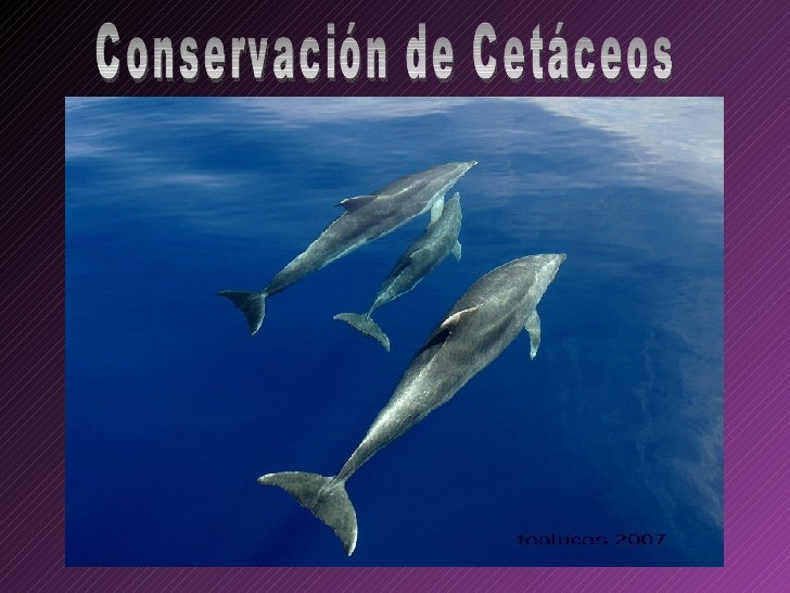 Conservación de Cetaceos