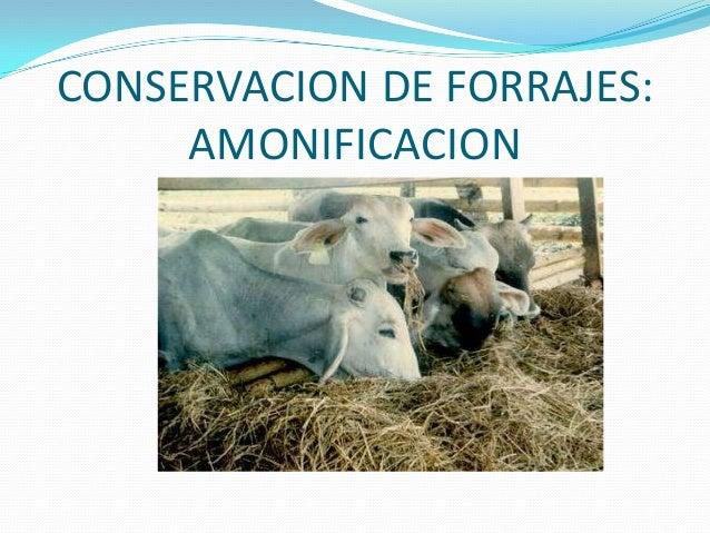 CONSERVACION DE FORRAJES:     AMONIFICACION