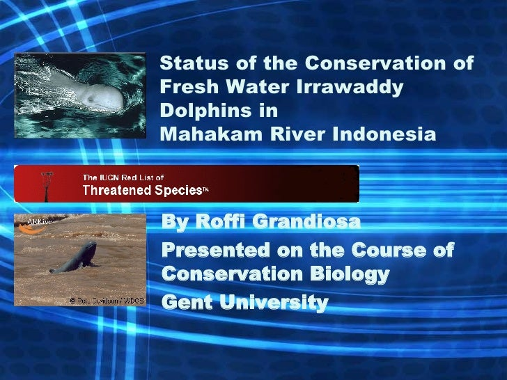 Status of the Conservation of  Fresh Water Irrawaddy Dolphins in  Mahakam River Indonesia By Roffi Grandiosa Presented on ...