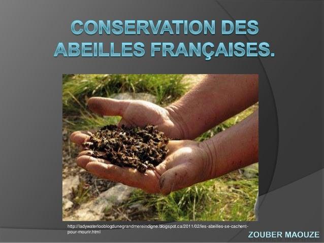 Conservation des abeilles françaises