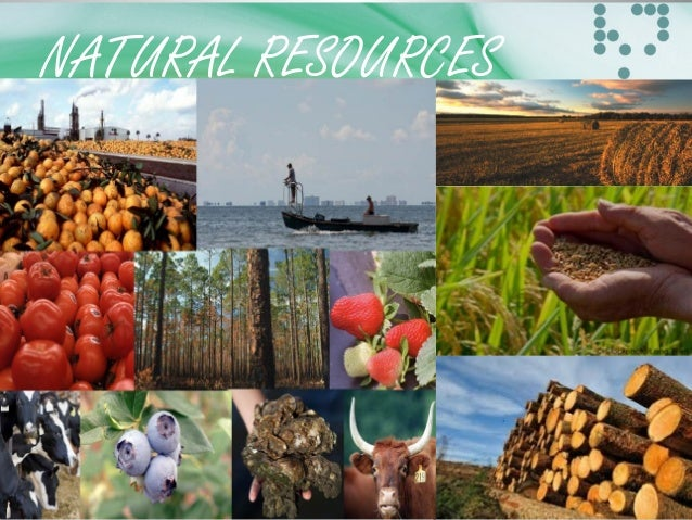 natural resources 3 essay Below is an essay on natural resources in africa from anti essays, your source for research papers natural resources in africa 3 a main natural resources 3.