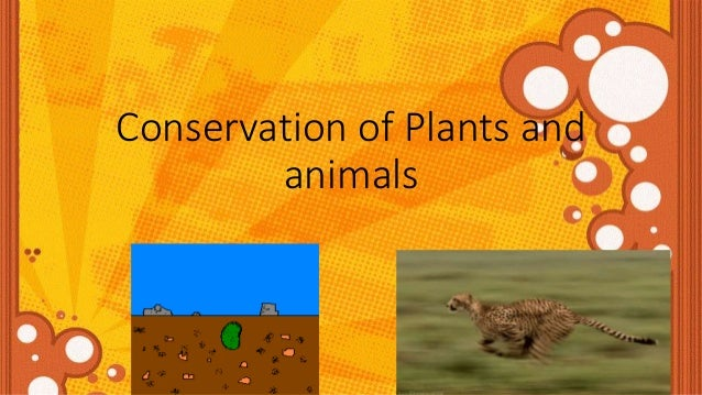 conservation of flora and fauna The conservation of arctic flora and fauna (caff) is the biodiversity working group of the arctic council, and its mandate is to address the conservation of arctic .