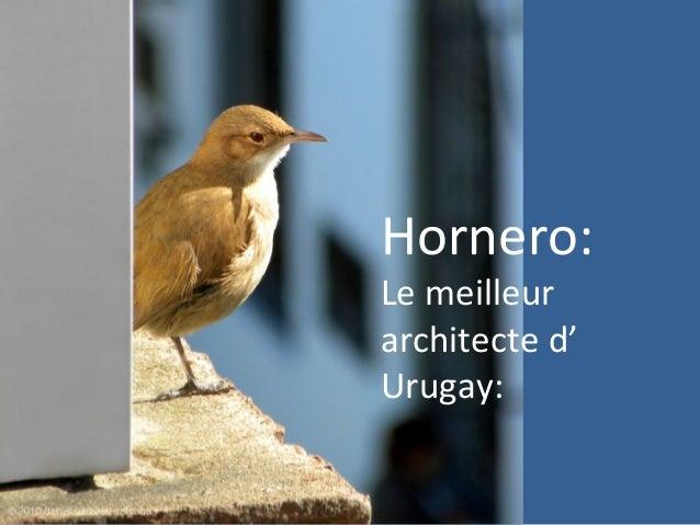 Hornero: Le meilleur architecte d' Urugay: