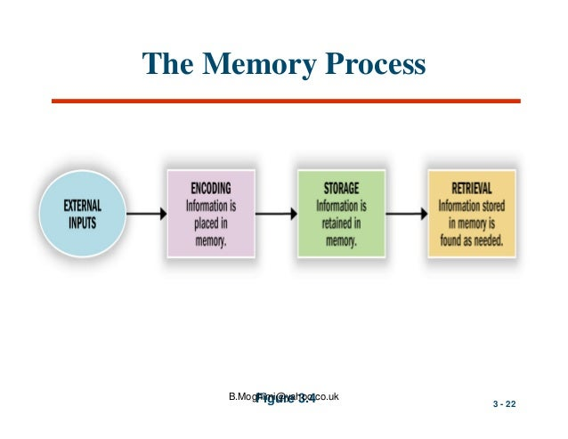 the process of encoding a stage of memory Model of memory that assumes the processing of information for memory storage is similar to the way a computer processes memory in a series of three stages procedural (nondeclarative) memory usually involves a series of steps or prcedures.