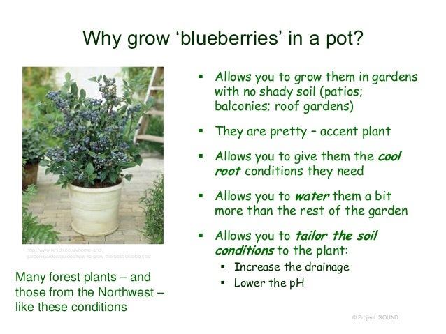 Container Gardening 2014