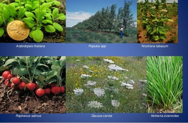 aprovechar las características de este tipo de plantas el objetivo