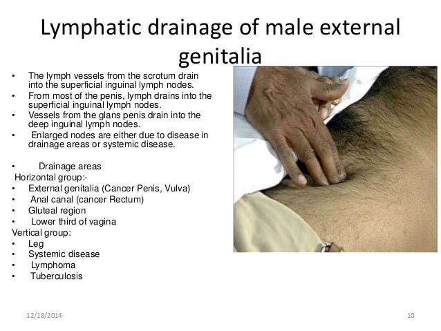 Anatomy of male genital area