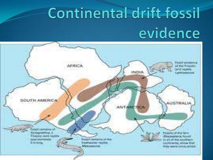 evidence of continental drift Study flashcards on continental drift - as geography at cramcom quickly memorize the terms, phrases and much more cramcom makes it easy to get the grade you want.