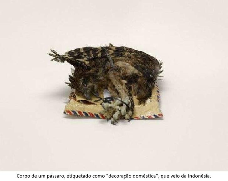 """Corpo de um pássaro, etiquetado como """"decoração doméstica"""", que veio da Indonésia.<br />"""