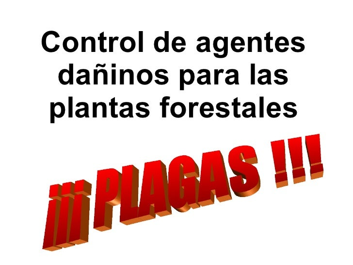 Control de agentes dañinos para las plantas forestales ¡¡¡ PLAGAS !!!