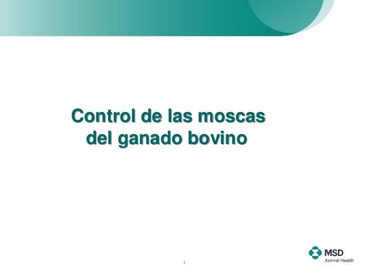 Control de las moscas del ganado bovino            1