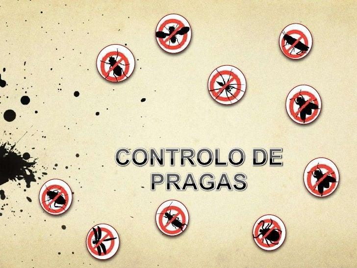 """O que são Pragas?    O conceito oficial de praga é estabelecido    pela FAO como sendo: """"qualquer espécie, raça    ou biót..."""
