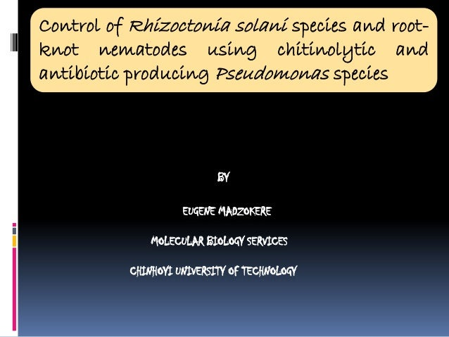 Control of Rhizoctonia solani species and rootknot nematodes using chitinolytic and antibiotic producing Pseudomonas speci...