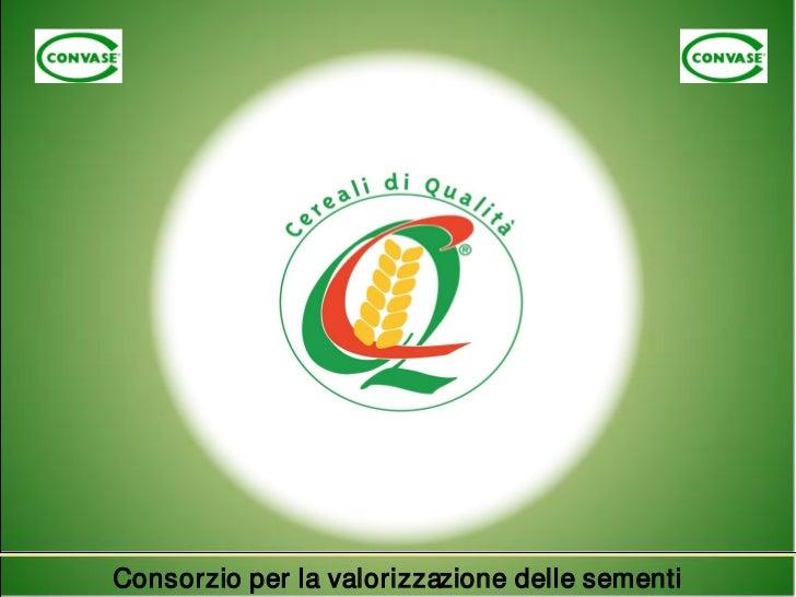 Convase 28 ottobre 2011 - Roberto Neri - La concia industriale dei cereali a paglia