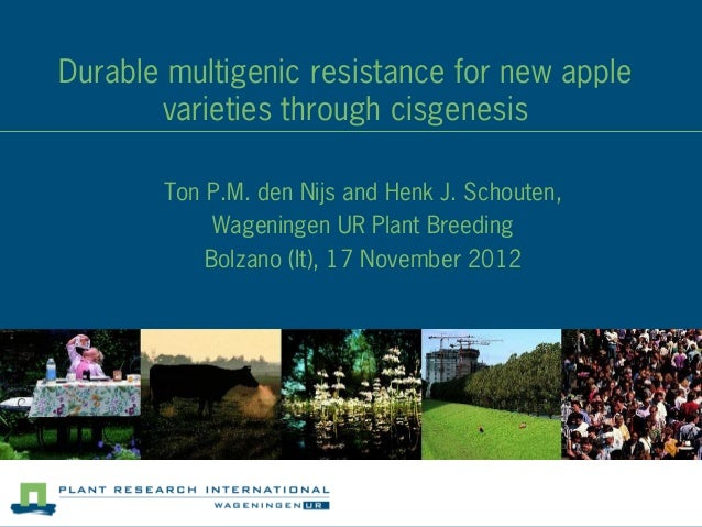 Durable multigenic resistance for new apple       varieties through cisgenesis       Ton P.M. den Nijs and Henk J. Schoute...